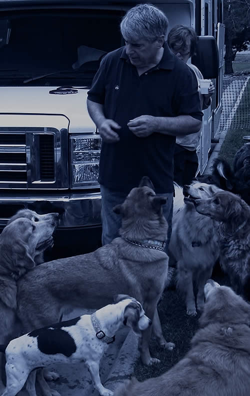 David Rosenfelt with dogs on the Woofabago Trip